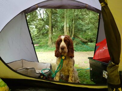 camping_05_12_2020-6.jpg